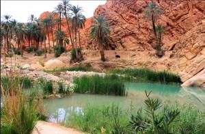 oassis1 algerie